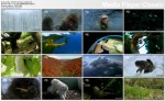 Wybryki Ewolucji  / Mutant Planet (2010) PL.1080i.HDTV.x264 / Lektor PL