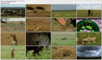 Tajemnice zwierz�t / Wildlife (2010) PL.TVRip.XviD / Lektor PL