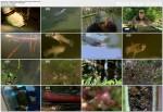 Przedziwny �wiat Owad�w / Buggin' with Ruud (2005-2006) PL.TVRip.XviD / Lektor PL